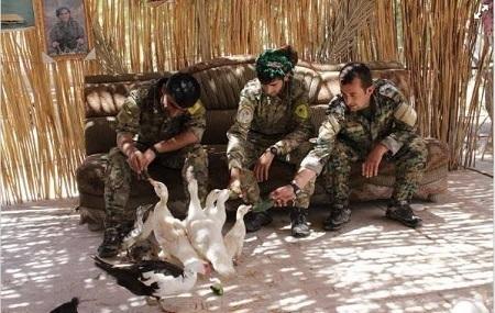 ئــان گــویــنــتــهر: شەڕ دژی دەوڵەتی ئیسلامی (داعش): کوردهکان وهك گەورەترین زەرەرمەند؟