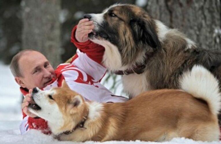فلاديمير بوتين لەبەرنامەی خۆشترین دەنگ بە خۆشترین دەنگ ..